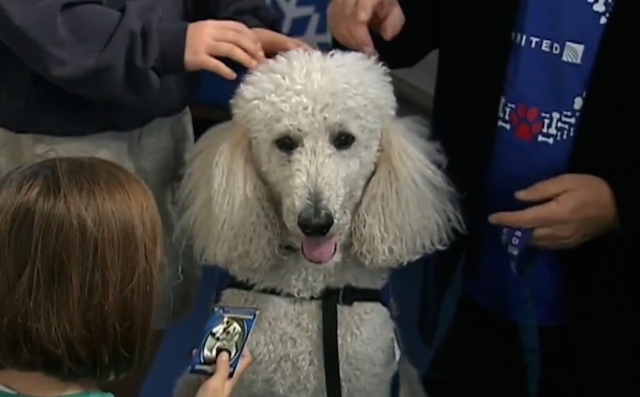 Picture of Rudy the Pet therapy dog.